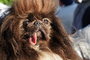 World's Ugliest Dog Contest, Sonoma-Marin Fair, 21/06/2019