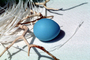 Blue egg, paper nest, twigs, PHEV01P03_19
