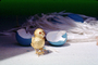 Golden Bird, tweet, tweeting, Blue eggs, paper nest, chirp, chirping, PHEV01P04_01