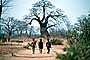 Children walking on a dirt path, Baobab Tree, Adansonia, Boys, curly, twisted, PLPV04P13_13