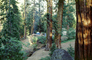 Forest, Sequoia Trees, Campsite, California, June 1979, RVCV02P01_17