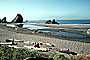 Driftwood, Beach, Sand, Ocean, Brooking, Oregon