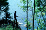 Fishing Pole, Lake, Trees, Man