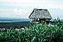 Thatched Hut, grass roof, beach, ocean, sand, Bali, Indonesia, building, Sod, TOEV01P10_13