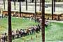 Students waiting in line, children, kids, palm trees, lawn, buses, VBSV02P14_15