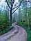Tree Lined Road, Washington Island, Wisconsin, VCRD01_049