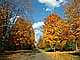 Fall Colors, Autumn, Deciduous Trees, Woodland, Highway M25, south of Alpena, Michigan, VCRD01_117