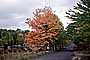 Country Road, Roadway, Fall Colors, Autumn, Deciduous Trees, Woodland, VCRV19P12_06