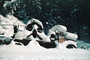 Snow Covered Truck, Cascade Mountains, VCTV01P01_19