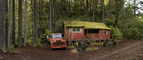 bucolic, home, house, domestic, moss, woods, Mendocino County, Panorama, VCZD01_019
